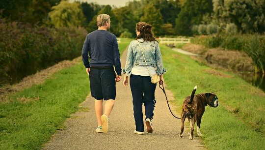 couple, seen fromthe back, walking dog