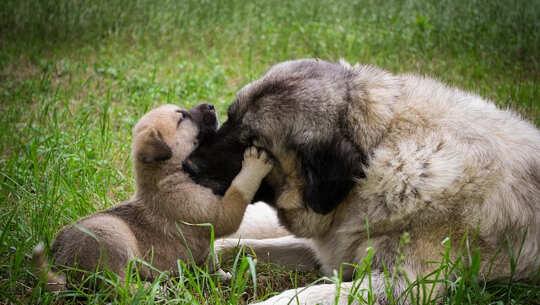 beeld van 'n hond en hondjie wat aan neuse raak