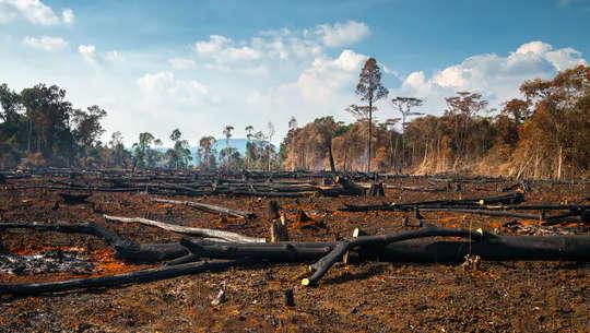एक उष्णकटिबंधीय वन में फेंकना - क्या पेड़ लगाना बेहतर है या इसे प्रकृति पर छोड़ दें?
