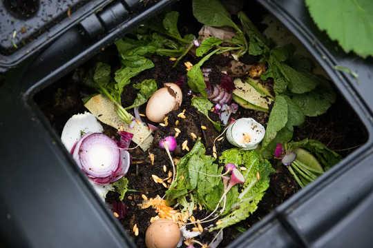 Was kann in den Kompostbehälter gelangen? Einige Tipps, um Ihrem Garten zu helfen und die Schädlinge fernzuhalten
