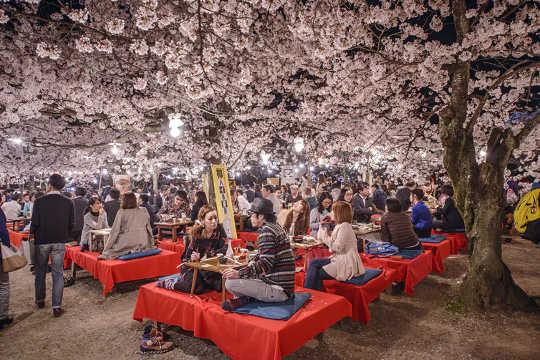 Вечеринка с любовью к цветам Ханами в Токио, Япония.