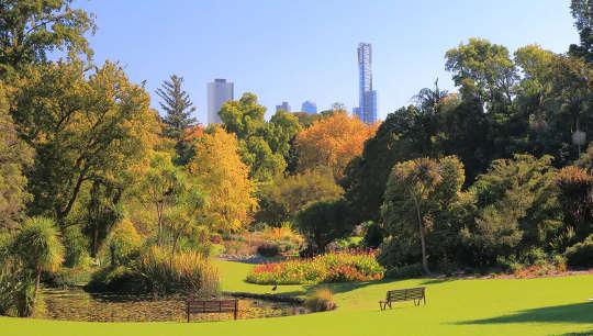 Kebun raya Melbourne - rumah bagi berbagai macam pohon.
