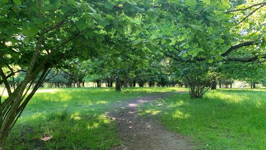 Padang rumput ek kota. Jalan alam di dekat rumah penulis.
