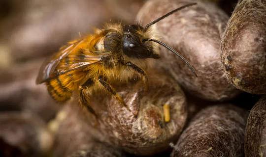Baby Bees Love Carbs - Hier ist, warum das wichtig ist