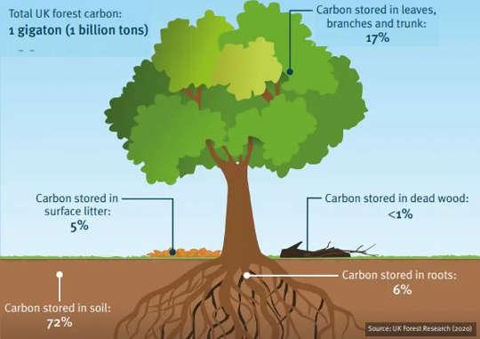 لماذا لا تكفي الأشجار لتعويض انبعاثات الكربون في المجتمع