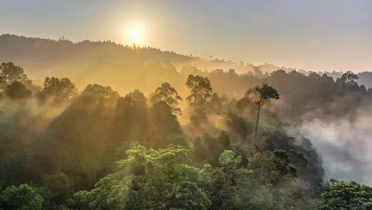 Varför träd inte är tillräckliga för att kompensera samhällets koldioxidutsläpp