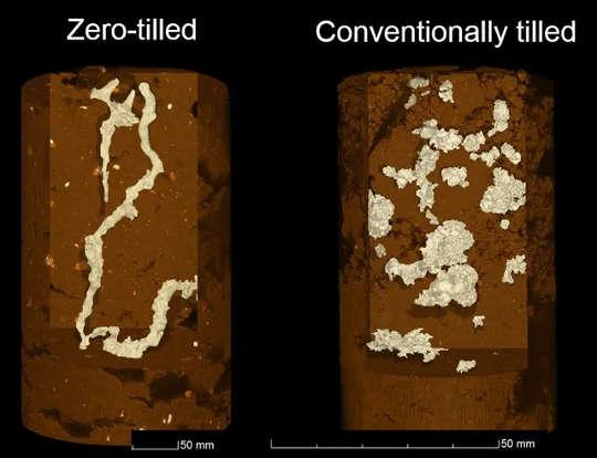 Herkömmlich bebaute Böden haben mehr Lufteinschlüsse, in denen CO2 erzeugt wird.