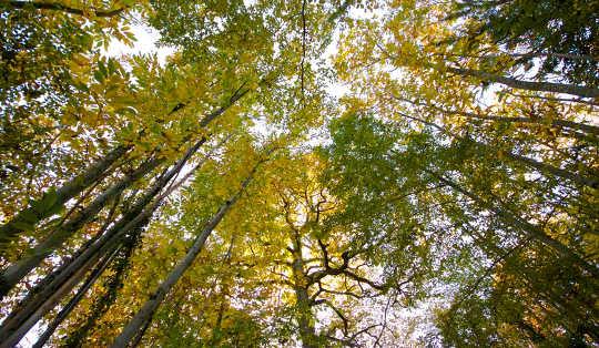 Perché non creare carta con qualcosa di diverso dagli alberi?