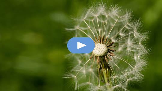수용과 변화 : 자연은 자주 변한다