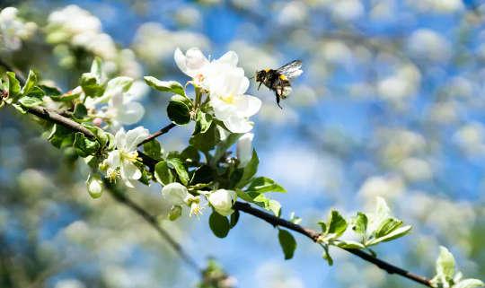 چرا من زنبورها را دوست دارم - و چرا شما هم باید بیش از حد
