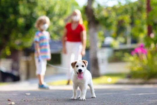 Đáng buồn thay, hầu hết những chú chó con mới bị đại dịch sẽ không được đi bộ đủ.