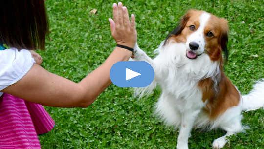 5 cose che possono interferire con una chiara comunicazione tra le specie