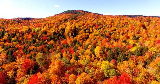 """יערות כמו זה במיין, ארה""""ב, נספרו לפתע בתקציב הפחמן כתמריץ להצטרפות ארה""""ב להסכם קיוטו."""