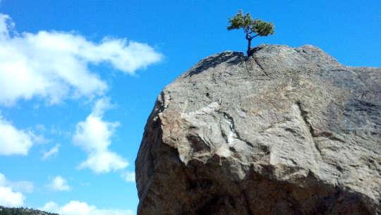 ein einsamer Baum, der auf einer kahlen Klippe wächst