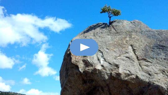 एक अकेला पेड़ एक नंगी चट्टान के ऊपर से बढ़ रहा है