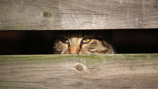 والإجهاد التي تؤثر على الحيوانات الأليفة الخاصة بك وتحبهم؟
