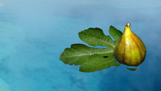 su üzerinde yüzen bir incir yaprağı üzerinde bir incir