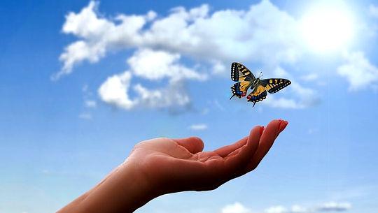 vlinder bo 'n oop hand en oop lug