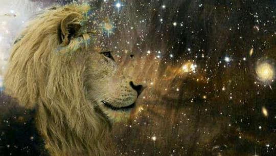 wajah singa memandang ke arah bintang