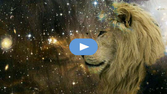 visage de lion regardant les étoiles