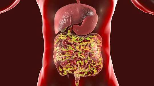 Un microbioma saludable construye un sistema inmunológico fuerte que podría ayudar a derrotar al Covid-19