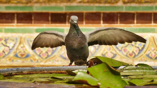 en due med spredte vinger