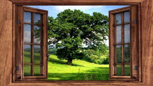 열린 창에서 나무의 보기