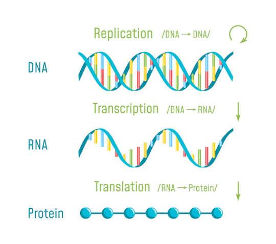 كيف يمكن أن يكون نوع واحد من الحمض النووي الريبي هو مستقبل علاج السرطان
