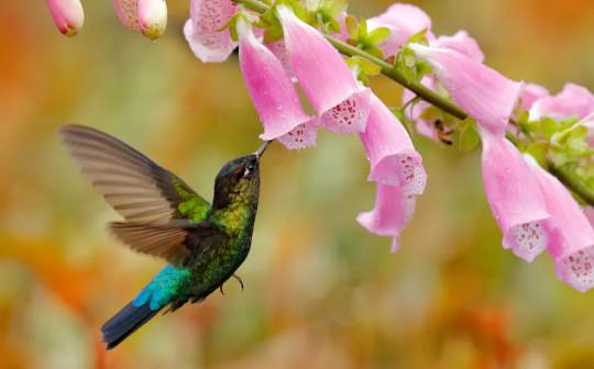 Wie der Kolonialismus Fingerhüte verwandelte und warum Kolibris der Grund sein könnten