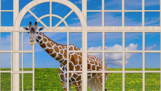 καμηλοπάρδαλη με το κεφάλι σε ένα ανοιχτό παράθυρο