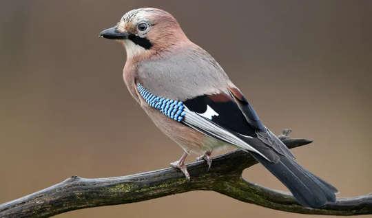Wir führten Zaubertricks an Vögeln durch, um zu sehen, wie sie die Welt wahrnehmen