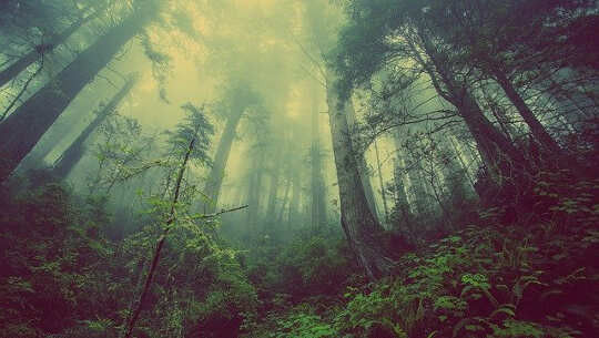 khu rừng với ánh sáng khuếch tán