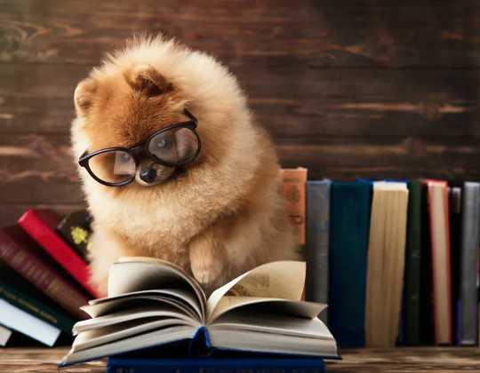 Como saber se seu cachorro é um gênio