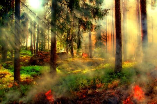 فصل خطرناک آتش سوزی دیگری در ایالات متحده غربی آغاز شده و منطقه به سمت یک بحران پیش می رود