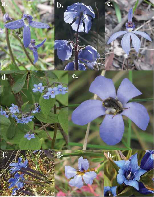 Bí ẩn về loài hoa xanh: Màu sắc hiếm có của thiên nhiên sở hữu sự tồn tại của nó đối với tầm nhìn của ong