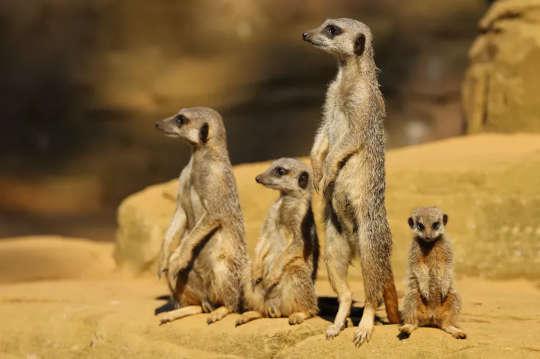 I mammiferi affrontano un futuro incerto mentre le temperature globali aumentano