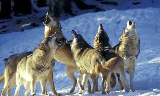 當狗吠時,他們是否使用文字進行交流?