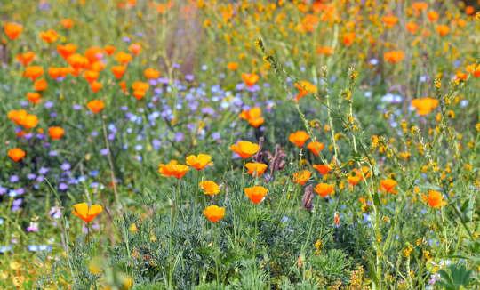 لمساعدة الحشرات: كيف تجعلها موضع ترحيب في حديقتك