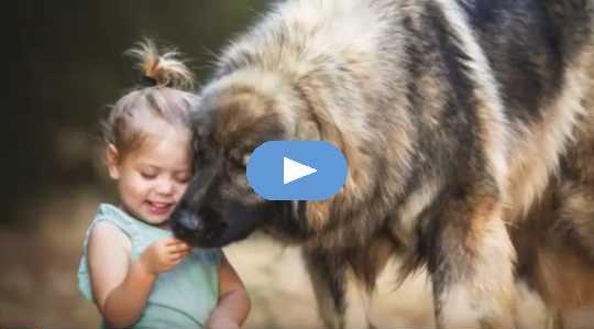 كيف تتحقق مما إذا كان كلبك عبقري