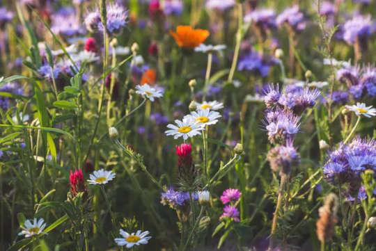 Hvordan helse og lykke avhenger av en blomstrende planet