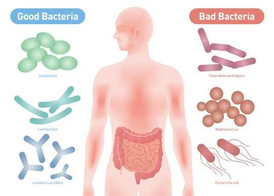 Por qué un microbioma saludable desarrolla un sistema inmunológico fuerte que podría ayudar a derrotar al covid-19
