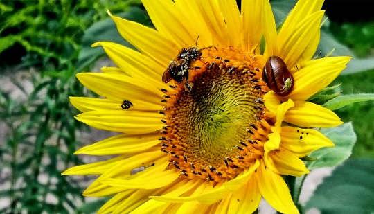 Pflanzen Sie Blumenwerbetafeln in Ihrem Garten, um Insekten in Schwierigkeiten zu helfen