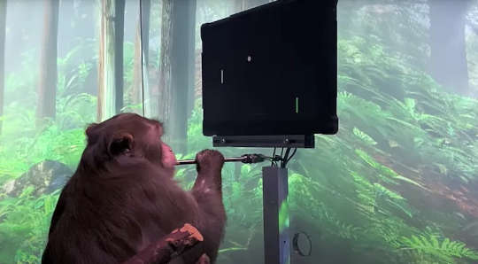 猿、ポケットベルは彼の心でポンを遊ぶことができます