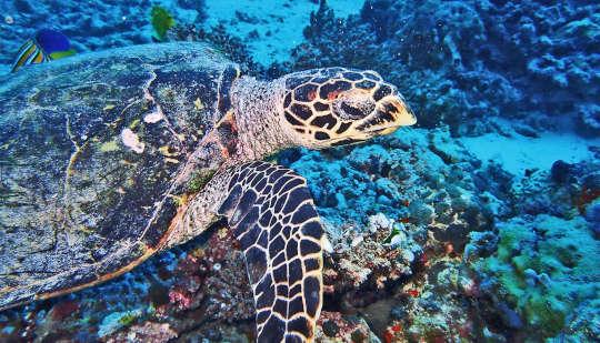 मानव गतिविधि समय के साथ समुद्री प्रजातियों को कैसे प्रभावित करती है