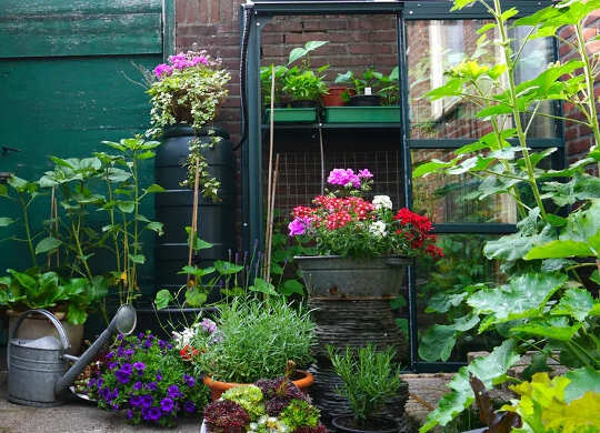 Hvordan gartnere er avgjørende for å bevare bier og sommerfugler - og hvordan du kan hjelpe dem