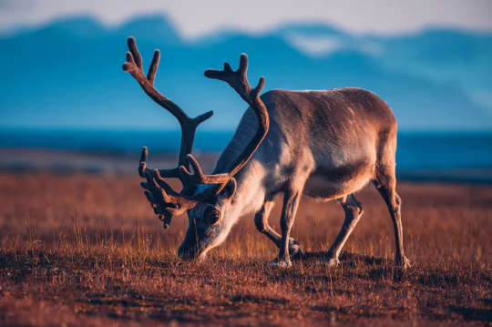 Млекопитающие сталкиваются с неопределенным будущим из-за повышения глобальной температуры