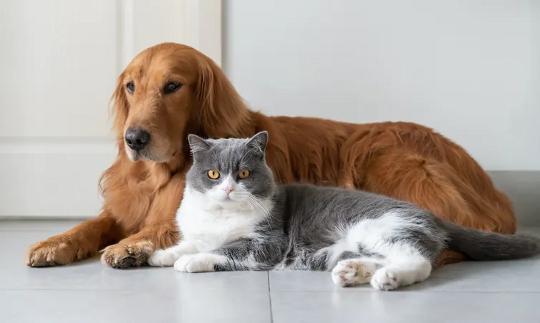 القطط لا تتجنب الغرباء الذين يتصرفون بشكل سيء تجاه أصحابها كما تفعل الكلاب