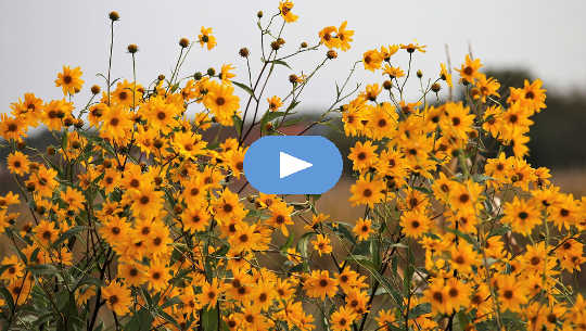 Membiarkan Perjalanan Penyembuhan dengan Meditasi Tahap Sel (Video)