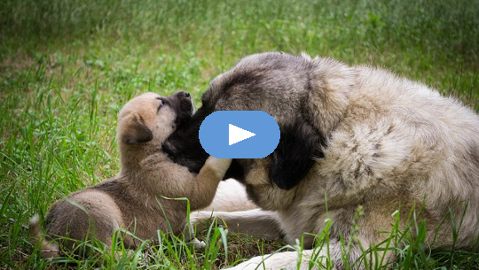 cachorro tocando la nariz con otro perro
