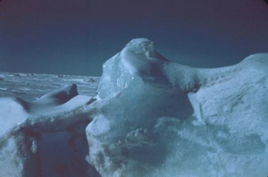 یخ برگر